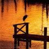 Heron sitting at the end of the Dockduring SunsetImage no: 050174.13Click HERE to add to cart