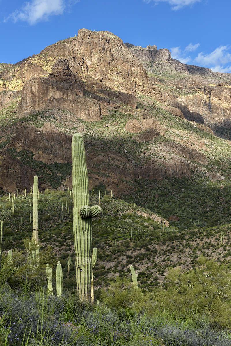 Tortilla Flats, ArizonaImage No: 19-002772Click HERE to Add to Cart