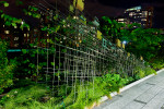 The-High-Line-Nightscape-111066-13
