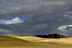 Landscapes from The Palouse in southeast WashingtonImage no: 17-017350   Click HERE to Add to Cart