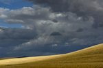 Landscapes from The Palouse in southeast WashingtonImage no: 17-017351   Click HERE to Add to Cart
