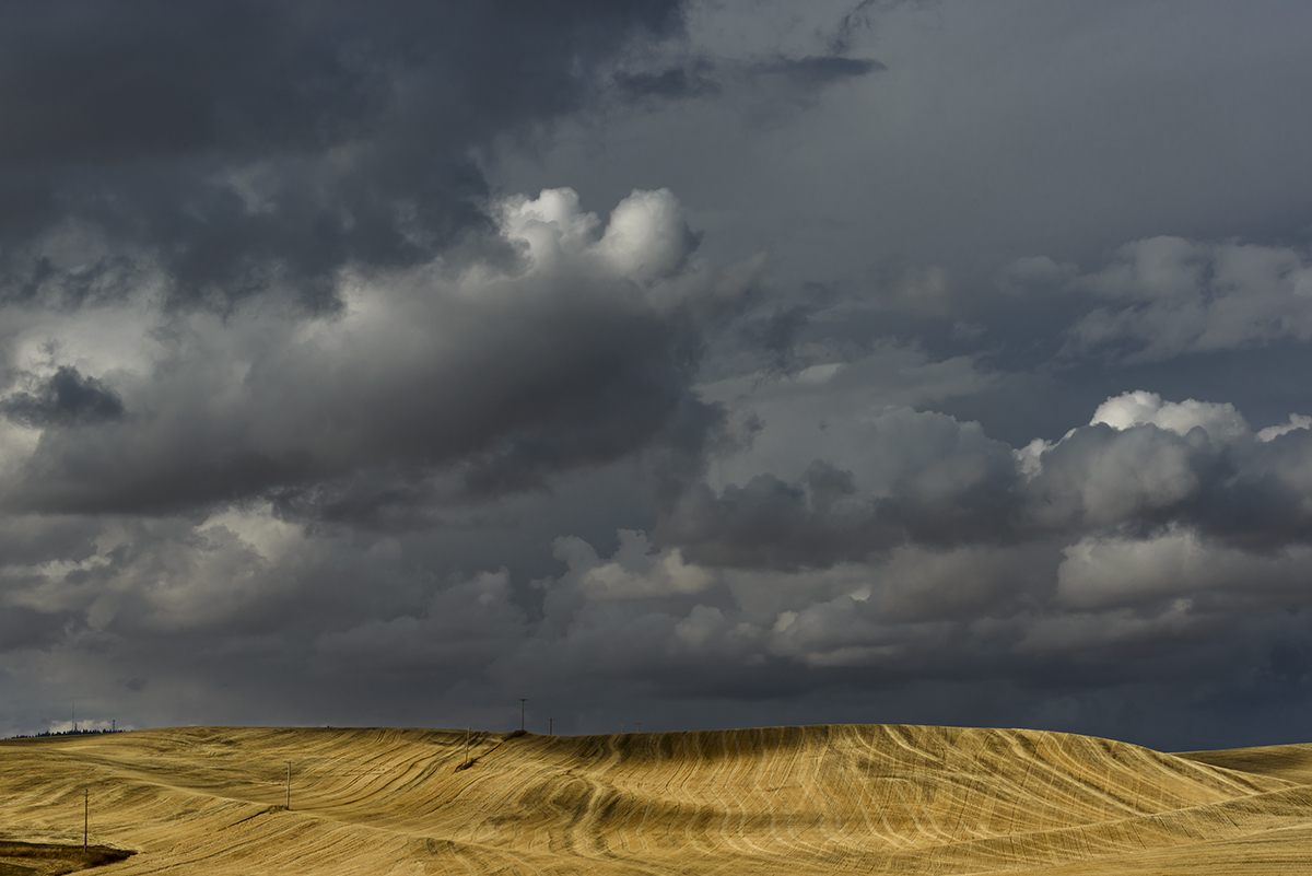 Landscapes from The Palouse in southeast WashingtonImage no: 17-017362   Click HERE to Add to Cart