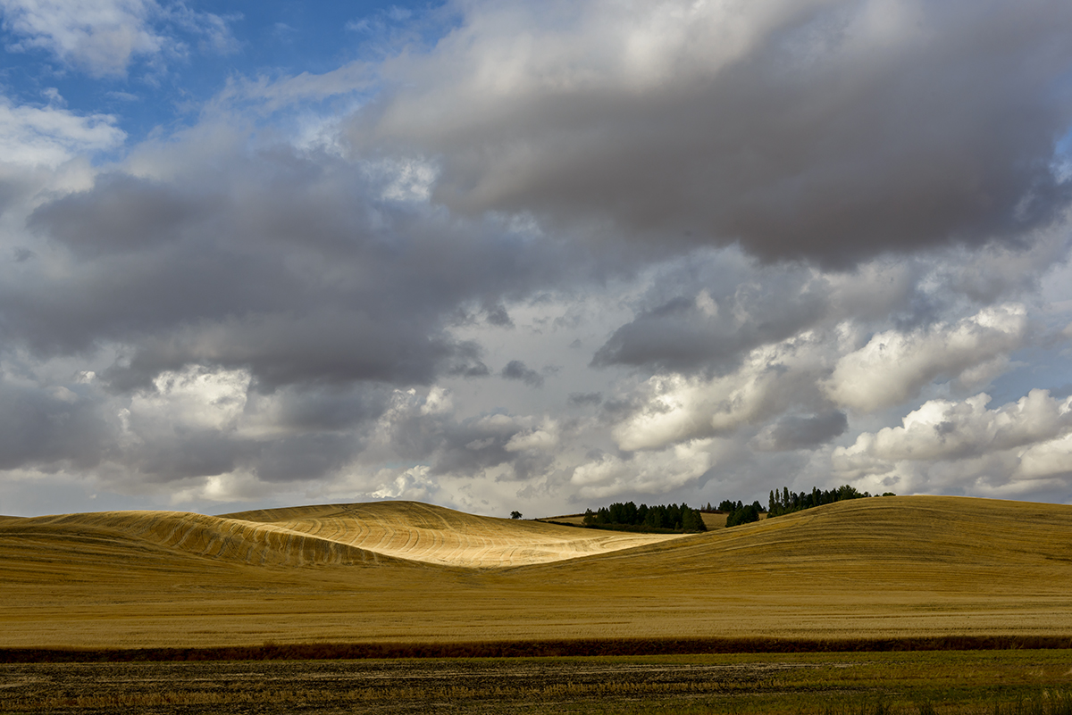 Landscapes from The Palouse in southeast WashingtonImage no: 17-017378   Click HERE to Add to Cart