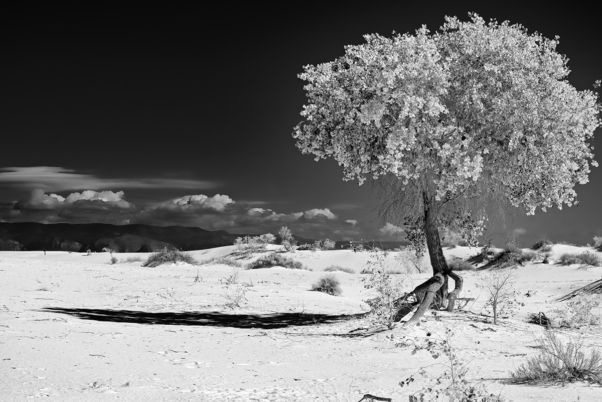 Black and White Image of the Dunes at White Sands, NM New MexicoImage no: 17-020836-bw   Click HERE to Add to Cart