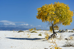 Images of the White Sands, New MexicoImage no: 17-020836   Click HERE to Add to Cart