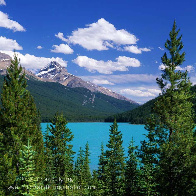 Gorgeous turquoise blueof the lake in summer.Icefields Parkway,Banff National Park,Alberta, Canada.Image No: 090384.1211Click HERE to add to cart