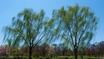Constitution Gardens, National Mall, Washington D.C.Image No. 090296.32  Click on link to add to cart  http://bit.ly/9AD5RW