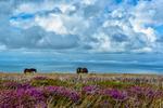 Devon, EnglandImage no: 14-016559   Click HERE to Add to Cart