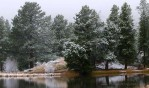 A snowy day in the Rockies, Rocky Mountain National Park, Colorado, USAImage no: 060596.09  Click on link to add to cart  http://bit.ly/apShnN