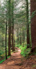 Woodland-Path-Great-Smoky-Mountains-National-Park-Tennessee-080364_17-19_vv