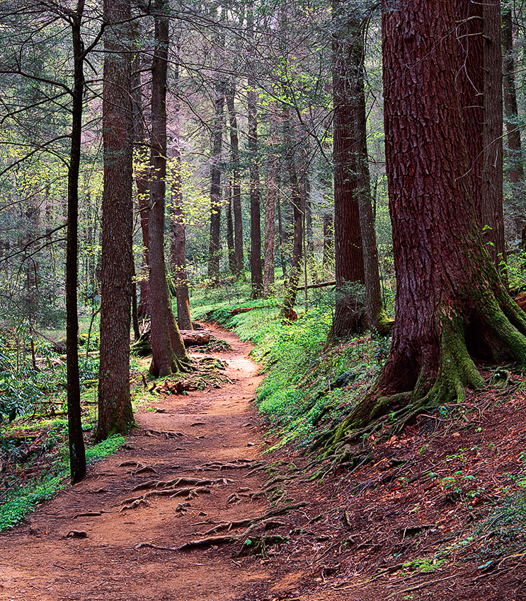 Woodland-Path-Great-Smoky-Mountains-National-Park-Tennessee-080364_17_vv