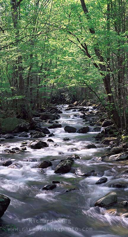 Greenbrier, Great Smoky Mountains National Park,Tennessee, USAImage no: 080494.1816Click HERE to add to cart