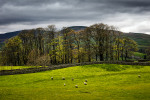 Yorkshire Dales National Park, EnglandImage No: 12-013801 Click HERE to add to cart