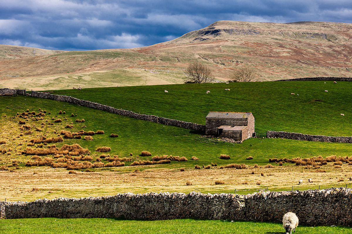 Yorkshire Dales National Park, EnglandImage No: 12-014336 Click HERE to add to cart
