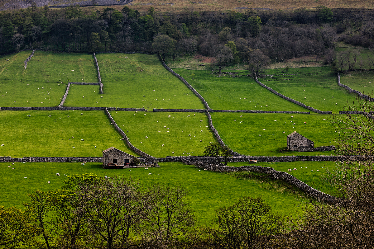 Yorkshire Dales National Park, EnglandImage No: 12-014987 Click HERE to add to cart