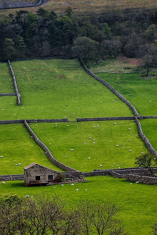 Yorkshire Dales National Park, EnglandImage No: 12-014980 Click HERE to add to cart