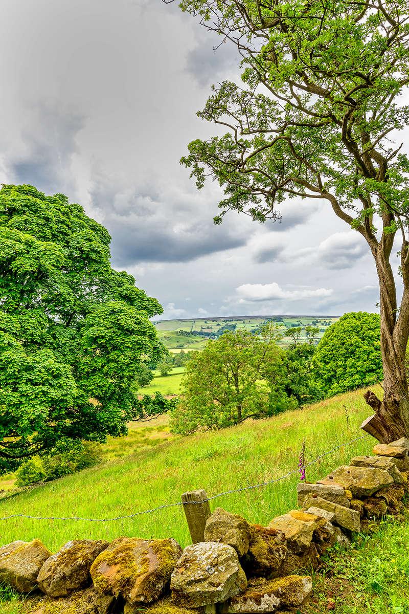 Yorkshire, EnglandImage No: 15-033557  Click HERE to Add to Cart