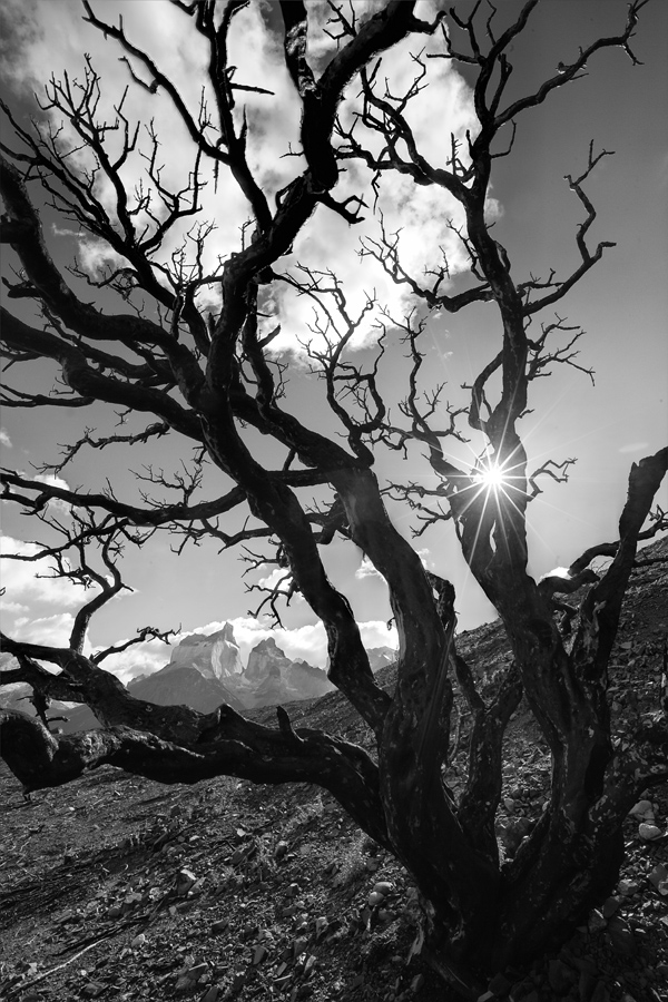 This photo presented a few challenges. The first was getting the Horns in the background without any branches in contact with it. The second was getting the sun in the right position which was just a little behind the branch. The last was the wait for the wind to die down.