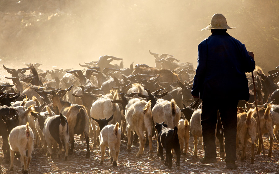 It was a stroke of luck while shooting the old man herding his goats. A truck drove past and sent the dust spinning right up into the air and sent me into a shooting frenzy.