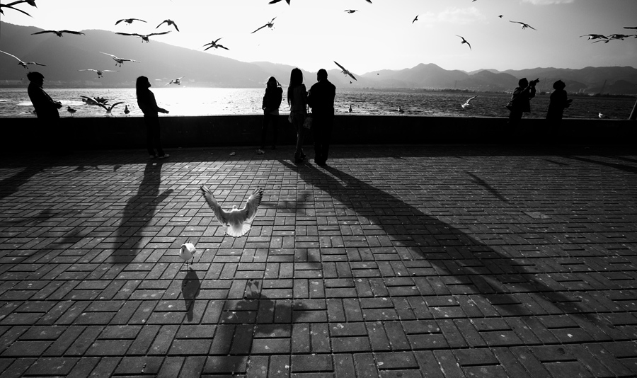 After getting the standard shots of the tourists feeding the gulls, I decided to shoot into the light and walked up and down the long stretch of ground before I came upon a few seagulls on the ground. Lifting up my camera, I framed and before long, they were after the pieces of crumbs that were flung in the air by the tourists in the background.