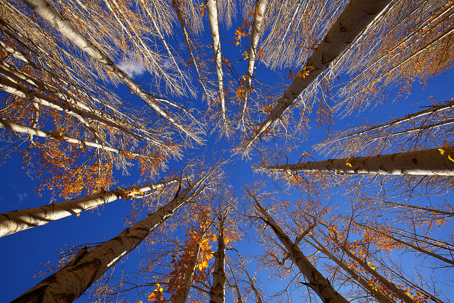 I personally never get bored of visiting the same location time and again. Somehow new compositions and conditions will usually happen and in this case, this was the second time to this location. Looking up, I saw the branches and blue sky and backlit leaves....