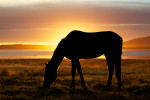 The horse was behind me, getting frontlit but the background was not interesting. Moving so that it was between me and the sun threw an interesting silhouette.