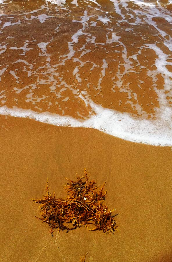 Not really sure whether the water was warm really but the yellowish sand and the dried marine plant caught my eye. A warming effecf from Camera+ enhanced it even further. The most difficult thing for this? Timing the incoming surf!