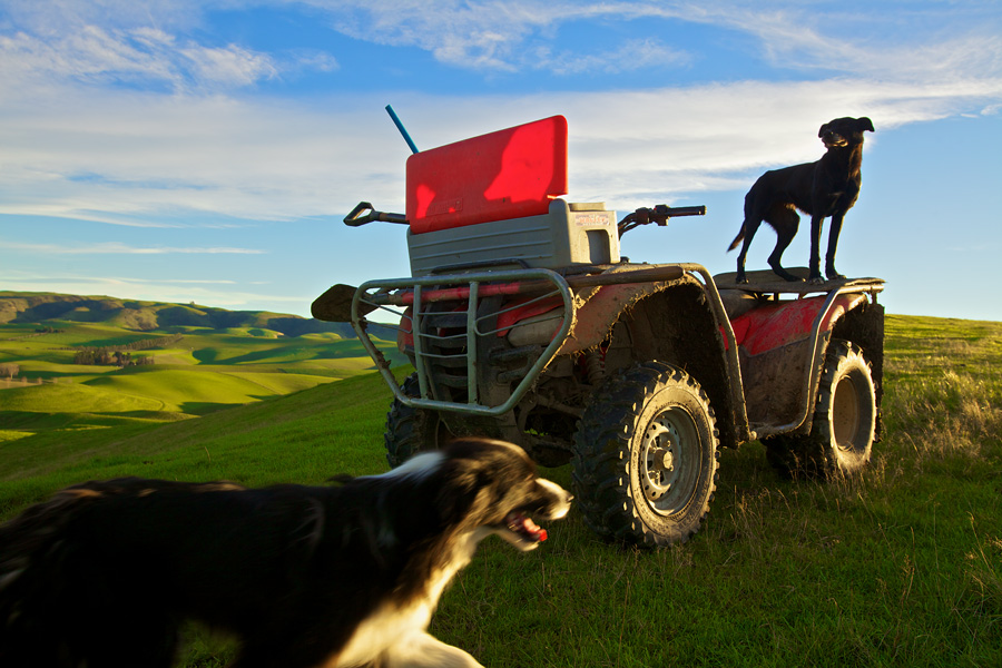 The farmer's dogs were sprinting up and down the fields, seemingly begging for work to start.