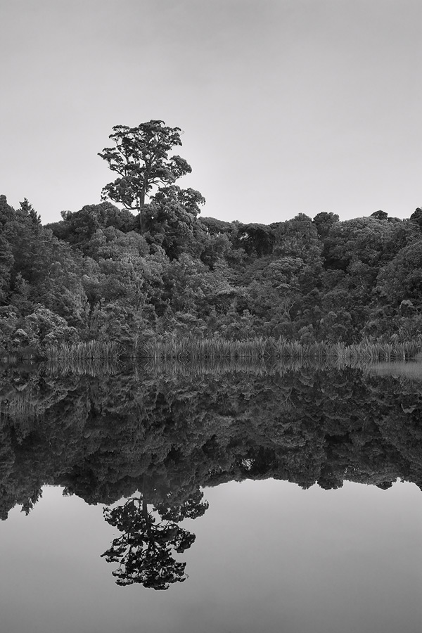 The lone tree seemed to be the only member of the forest striving to reach for the skies. Taken at the Catlins, the still waters provided a near perfect reflection.