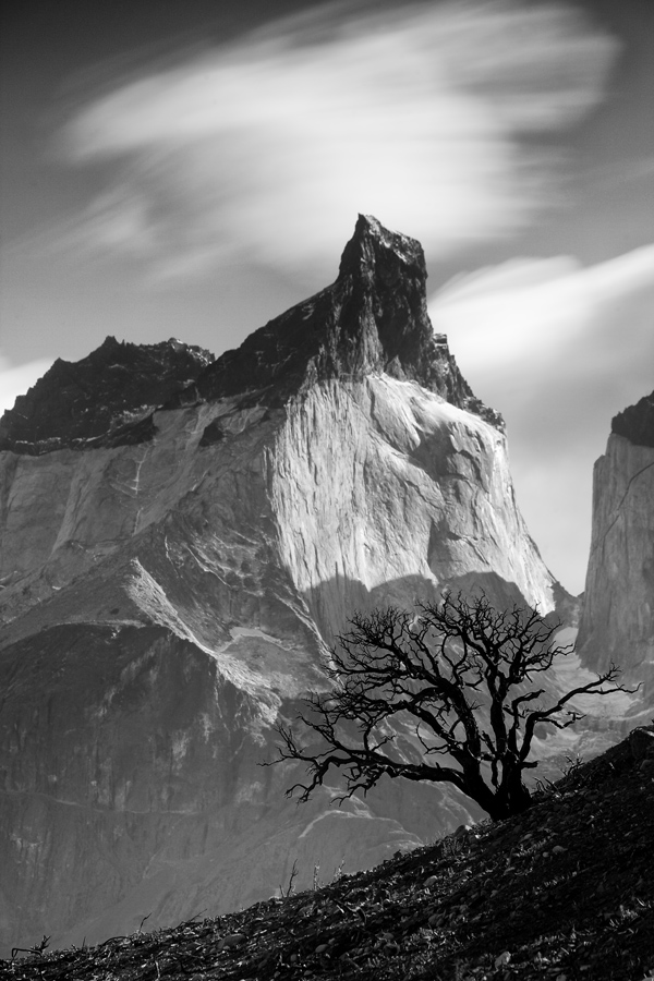 A Lenga stands alone amidst the destruction of the Lenga forest in Torres Del Paine National Park, Chile.