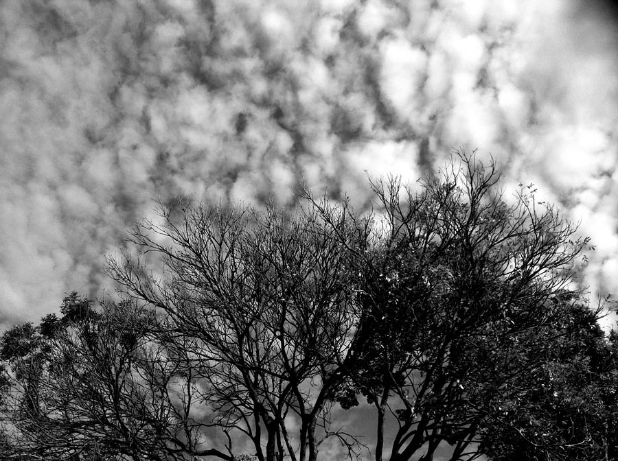 Photos opps are everywhere but a great photo not only comes from the subject but alongside with visualisation of how the final product will look like. For this photo, I was rushing up the hillside on my way for a meeting when I saw the white puffy clouds in the sky. Set against the contrast of the trees branches which were more and more gaining a resemblance of firewood, ready to roast the marshmallows. The coloured version was not going to be good due to a lack of contrast but a monochrome will work well. All that thinking happened before sliding the unlock function on the iPhone.