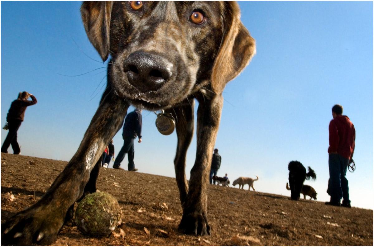 SSP_DOGS_WEB_2012_0001