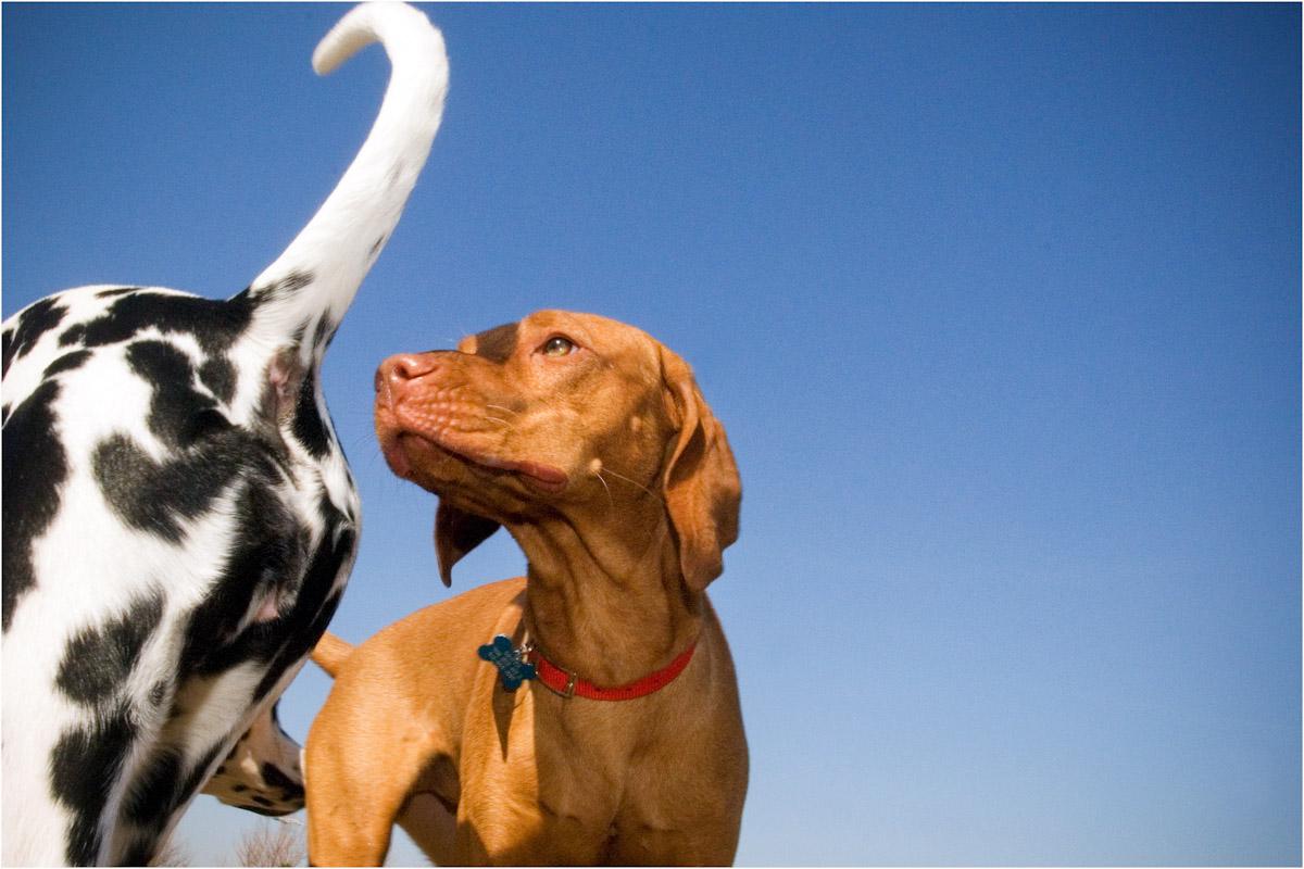 SSP_DOGS_WEB_2012_0003