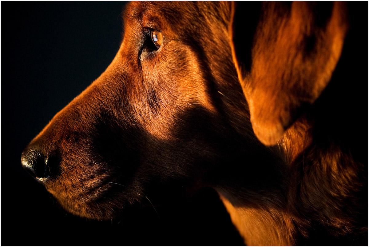 SSP_DOGS_WEB_2012_0008