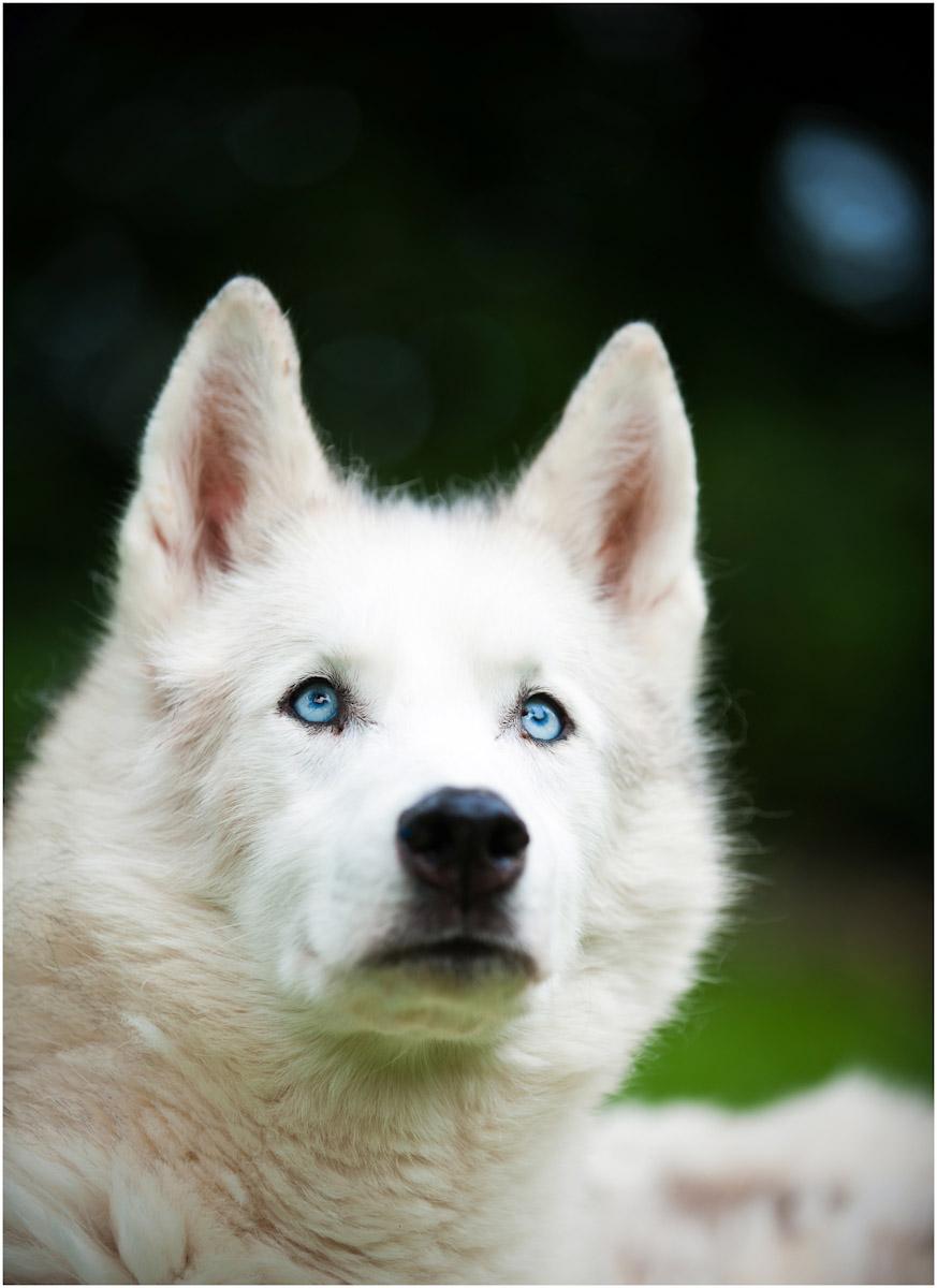 SSP_DOGS_WEB_2012_0010