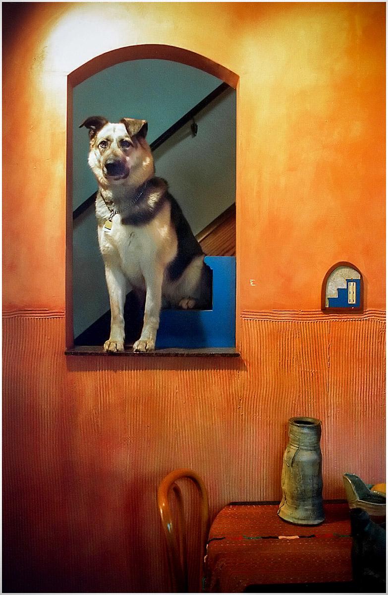 SSP_DOGS_WEB_2012_0013