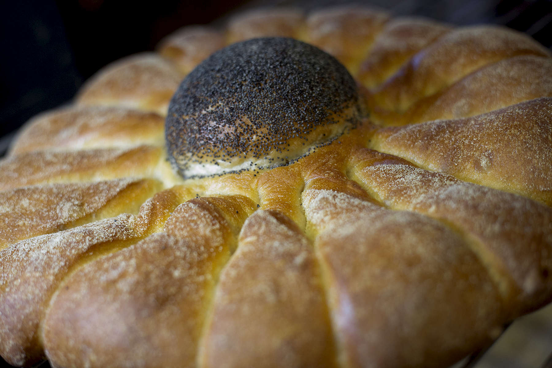 Sunflower bread from Pearl Bakery in downtown Portland.