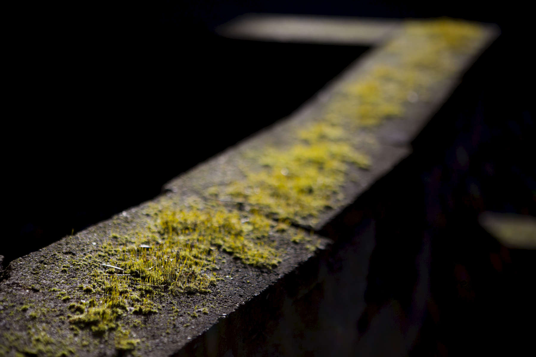Moss, algae and lichens grow abundant during the winter, and glow brilliantly in the spring sun. Portland, OR.