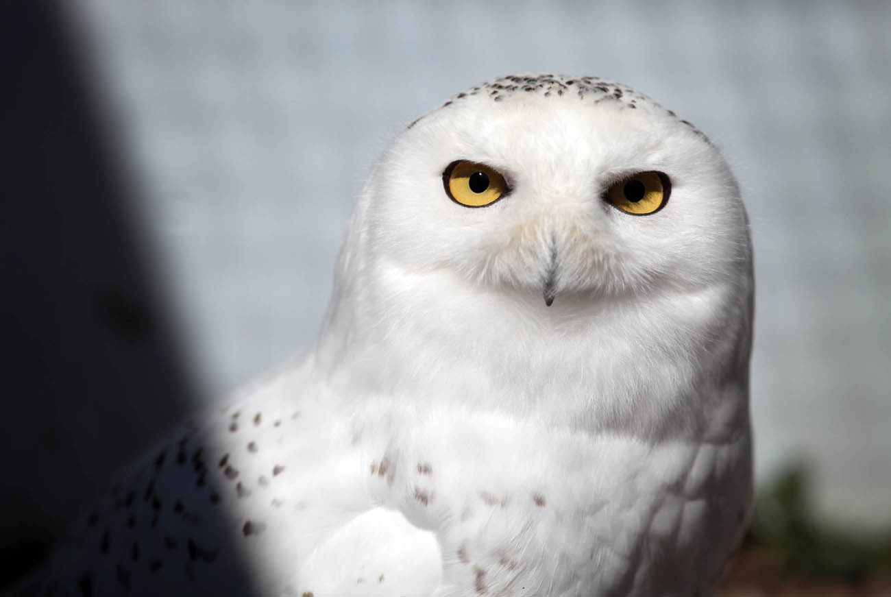 Raptor Education Group Inc. in Antigo has been rehabilitating birds, both large and small, for more than 20 years. Video by Kristyna Wentz-Graff/Milwaukee Journal Sentinel