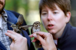 A small group of bird enthusiasts gathered at Riverside Park to catch and tag small songbirds. Information gathered will help researchers learn more about the birds' migration habits.