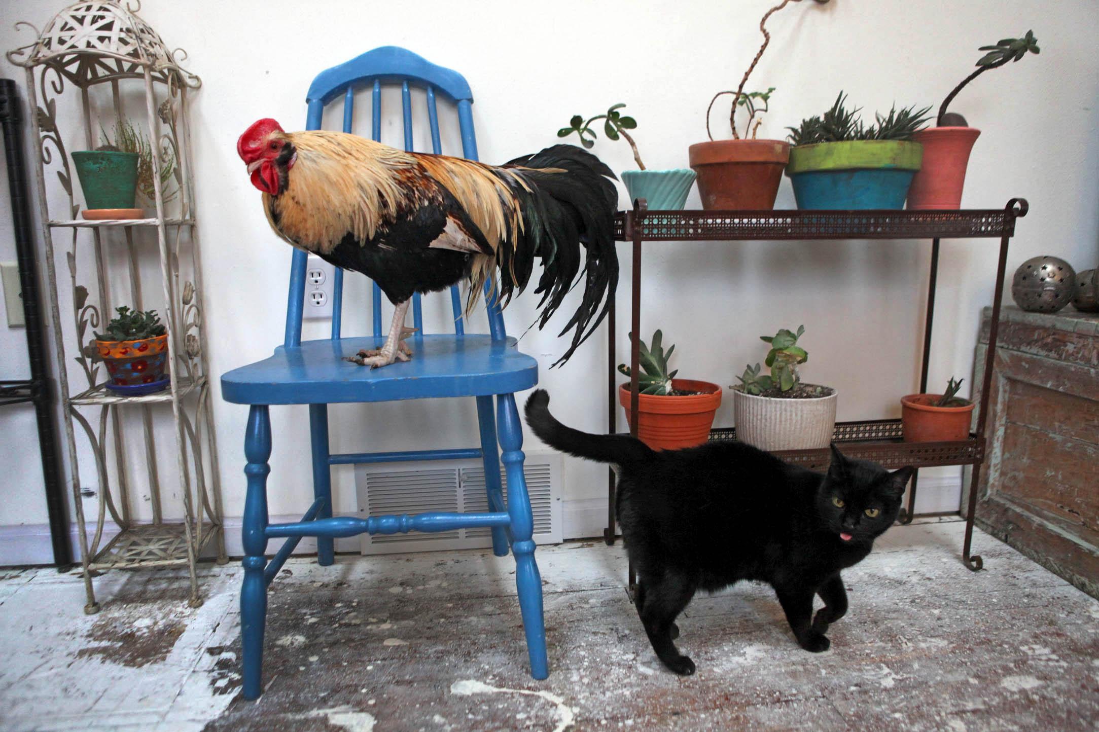 chicken_nwg_kwg_1