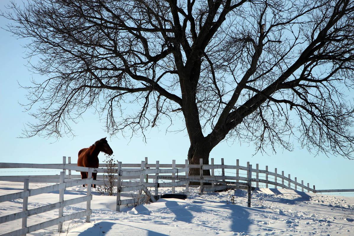 w_horse_nws_kwg_1