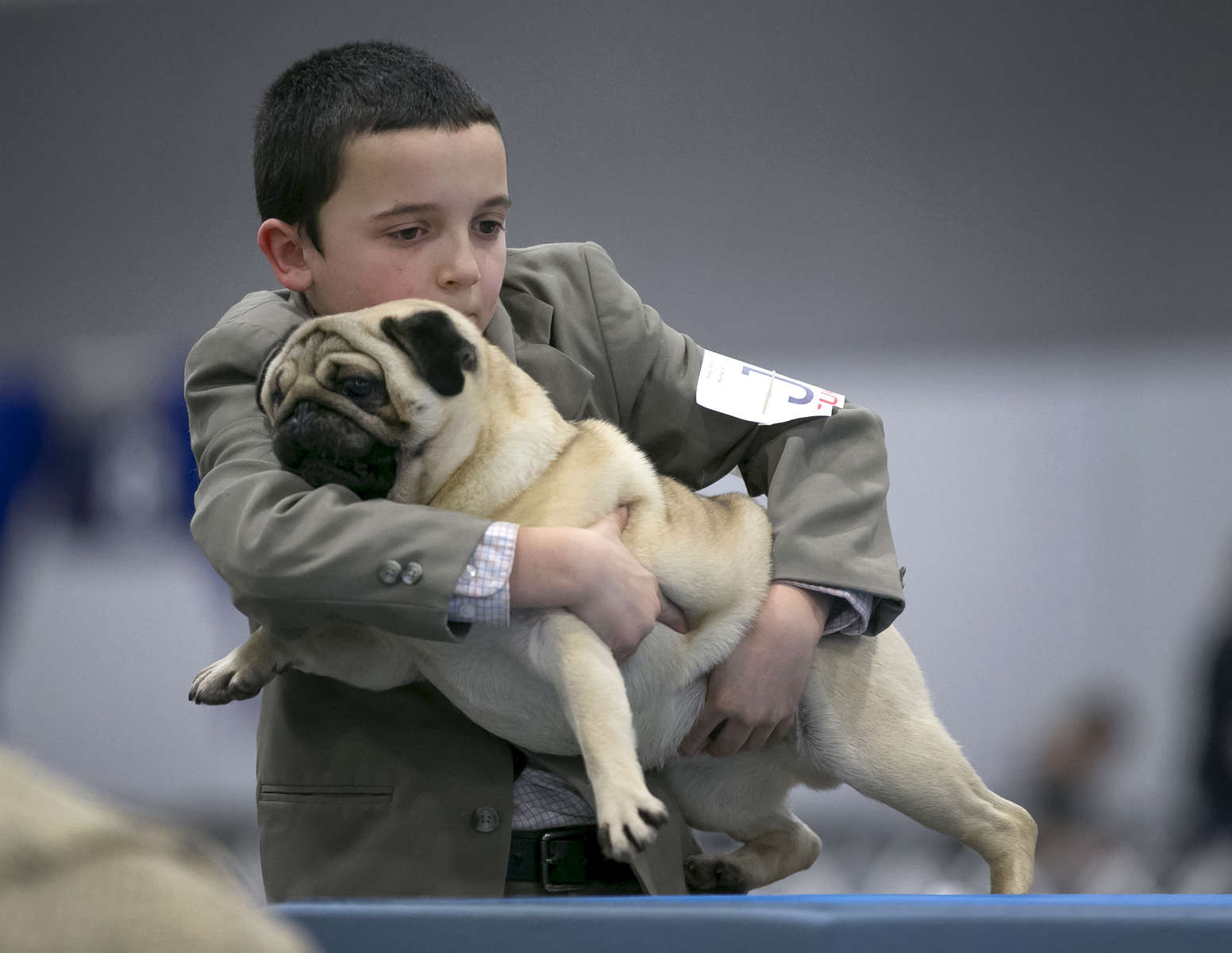 Competitor Matthew Mueller, 9, of La Center, WA, lifts Pug ''Gibs'', from a table as he shows the dog in the Rose City Classic Dog Show in Portland, Jan. 16, 2015 at the Portland Expo Center. The show runs through Sunday and features 175 breeds of dog, with about 3,000 dogs in the event. Kristyna Wentz-Graff / The Oregonian