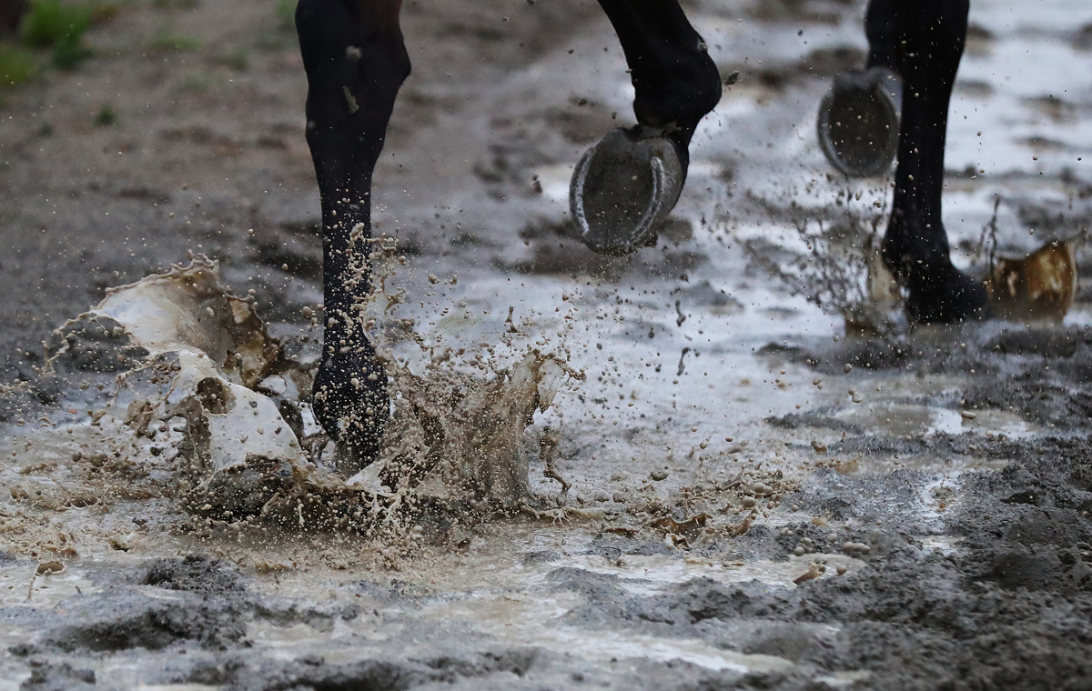 A horse walks on the wet track during training prior to the 149th running of the Belmont Stakes at Belmont Park on June 5, 2017 in Elmont, New York.