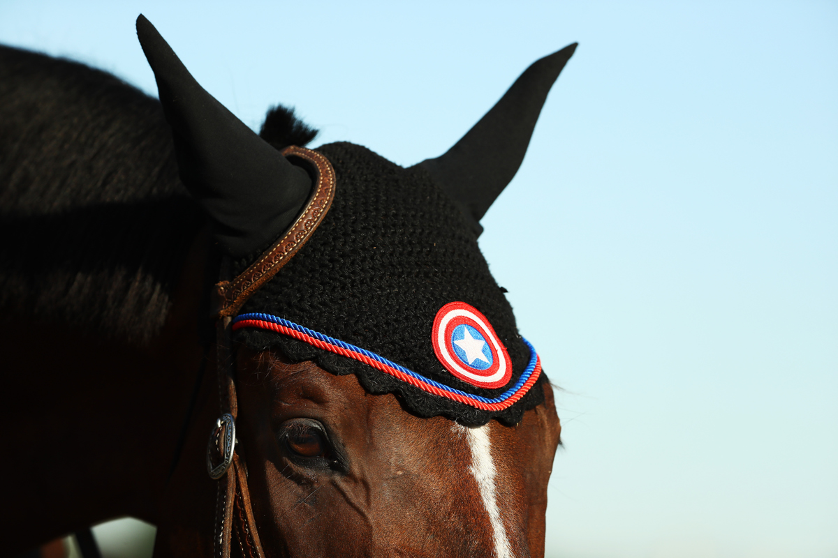 Stable Pony Jack wears a Captain America Ear Bonnet on the track during a training session prior to the 149th running of the Belmont Stakes at Belmont Park on June 8, 2017 in Elmont, New York.
