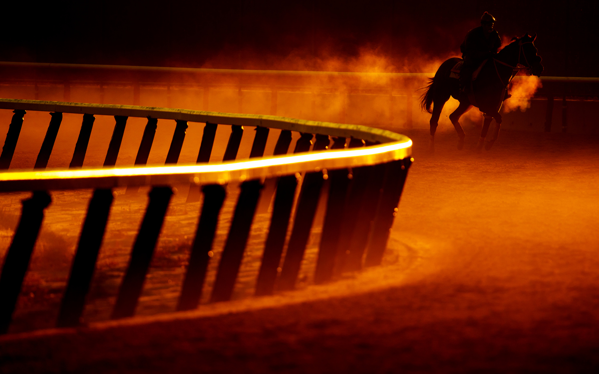 A thoroughbred and Exercise Rider train at sunrise  prior to the 149th running of the Belmont Stakes at Belmont Park at Belmont Park on June 9, 2017 in Elmont, New York.