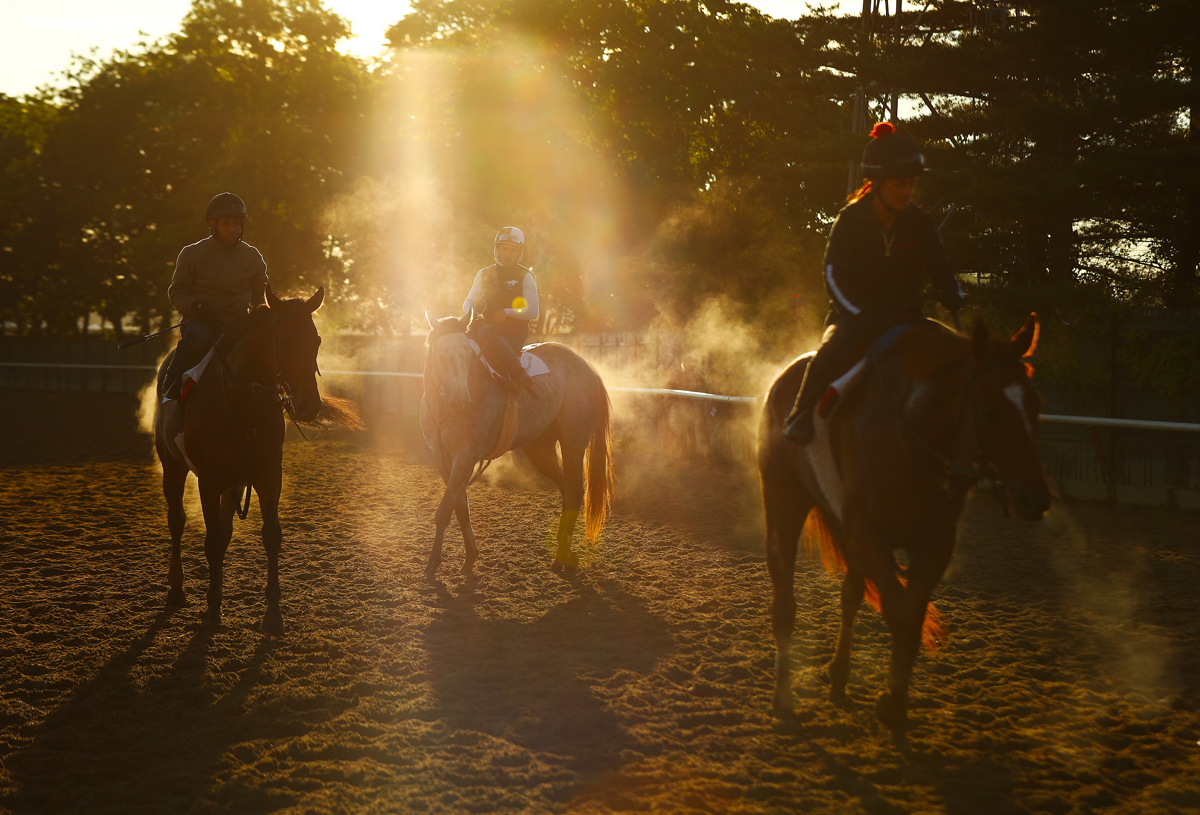 Thoroughbreds and Exercise Riders come off of the track at sunrise  prior to the 149th running of the Belmont Stakes at Belmont Park at Belmont Park on June 9, 2017 in Elmont, New York.