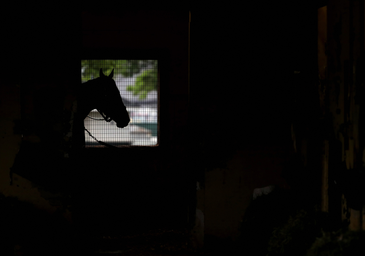 A horse looks out of it's barn prior to the 149th running of the Belmont Stakes at at Belmont Park on June 5, 2017 in Elmont, New York.