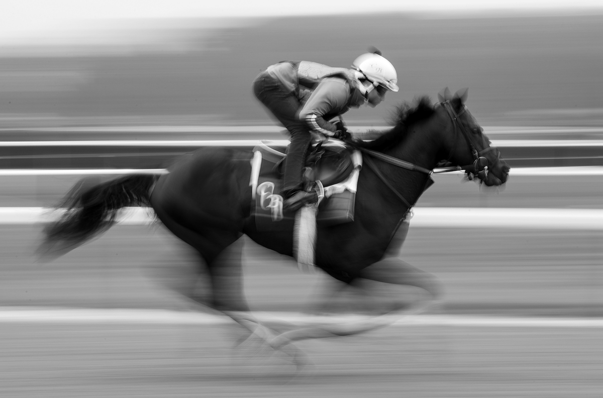 A horse gallops during training prior to the 149th running of the Belmont Stakes at Belmont Park on June 5, 2017 in Elmont, New York.