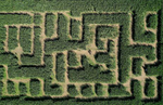 An aerial view of people in a corn maze at Harbes Family Farm on October 06, 2020 in Mattituck, New York.